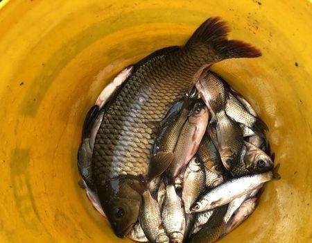 海河钓鱼,今年第一次钓着一条鲤鱼 龙王恨饵料钓鲫鱼
