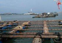 青口螺排钓鱼台
