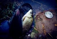 浅谈坑钓如何避免跑鱼情况频发