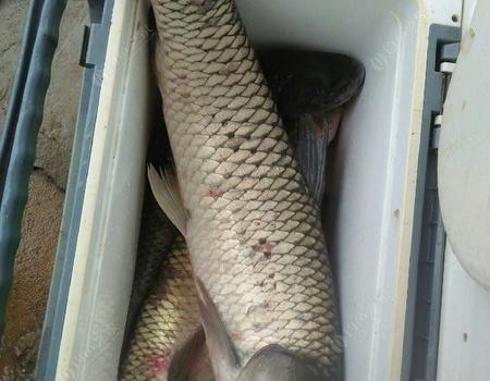 冒着两天一夜大台风去钓鱼,钓的鱼回来吃不完,送,送,送 老鬼饵料钓罗非鱼