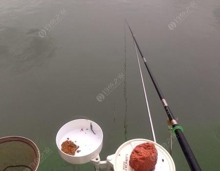 太湖魚難釣鬧小鰱魚 老鬼餌料釣鰱鳙魚