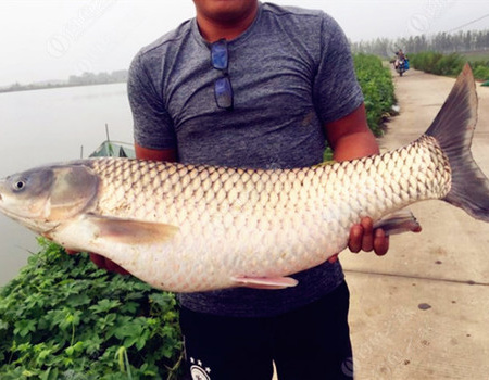 秋季風雨天湖邊釣草魚的一些心得