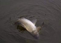 浅谈脱钩跑鱼原因与预防技巧