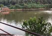 平湖生态园