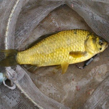fishing33521