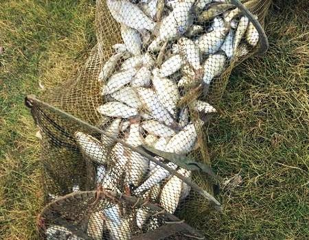 长江钓海竿的真多 自制饵料钓草鱼