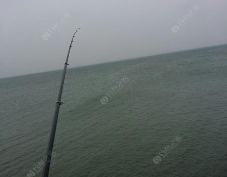 渤海湾燕鱼肥美季节