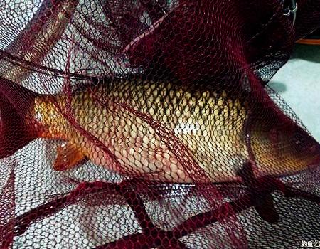 刷新个人纪录,秋季擒巨鲤,分享自制料 自制饵料钓草鱼