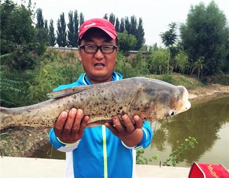 自留地私家池塘激战野生鲤鱼,意外收获大胖头 自制饵料钓鲢鳙鱼