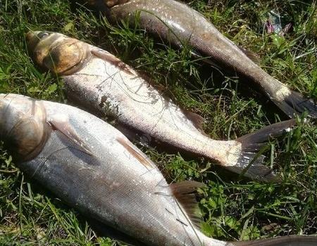 河水上涨难解毒,小山塘里过把瘾 天元饵料钓鲢鳙鱼