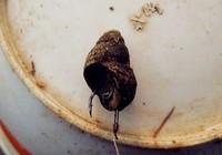 分享黑坑钓青鱼的浮漂调钓与用饵技巧