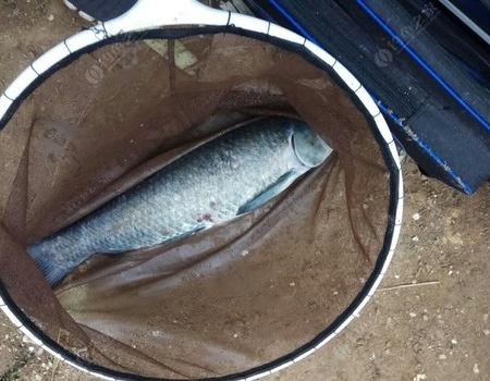 钓鱼是心灵的守候——水沟练杆 自制饵料钓青鱼