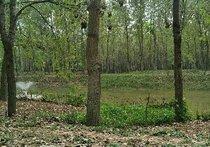 宿鸭湖湿地桃花园