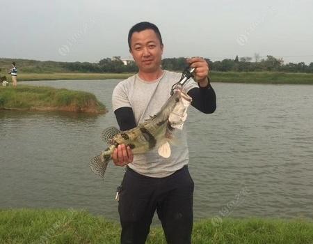 国庆长假台钓路亚解毒 自制饵料钓鳜鱼