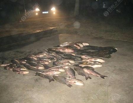发发今年八月最多一次鱼获 自制饵料钓青鱼