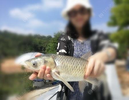 十一游玩第一次釣草魚 釣魚王餌料釣草魚