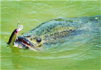 钓友为大家分享路亚黑鱼经验心得