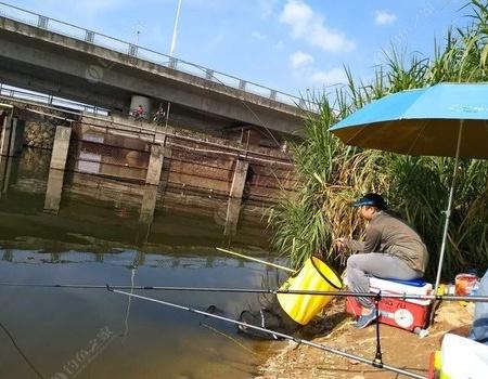 国庆七天乐之松山湖初体验(三) 钓鱼之家饵料钓鲮鱼
