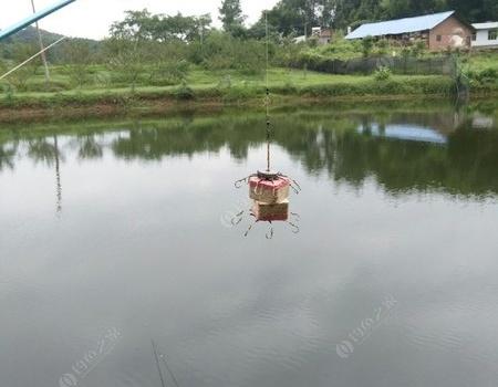 双节坐钓两天 钓鱼之家饵料钓草鱼