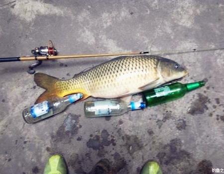 小筏杆显摆④ 自制饵料钓鲤鱼