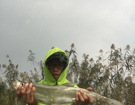 一条可以吹30年巨物 钓鱼之家饵料钓鳊鱼