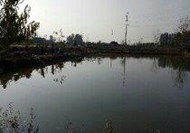 大卢村生态垂钓中心