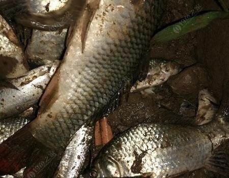 秋高气爽,渭河垂钓。 钓鱼之家饵料钓鲤鱼