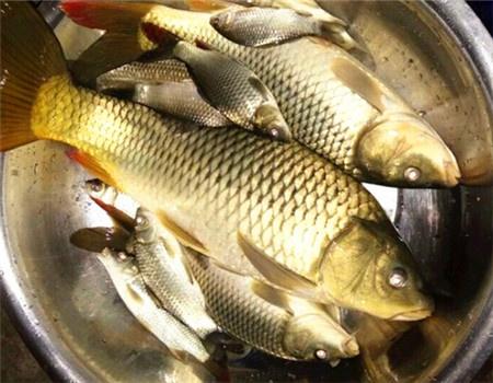 夜钓遇药师 钓鱼之家饵料钓鲤鱼