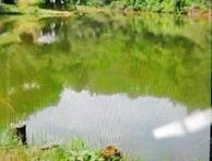 三丫塘钓鱼场