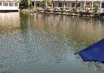 西丽湖钓鱼场