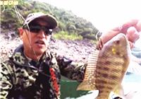 《大海路亚讲堂》20171105 紧水滩探钓收获多种鱼