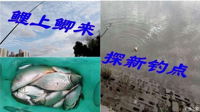 【结伴原创89】探新钓点,鲤上鲫来-201