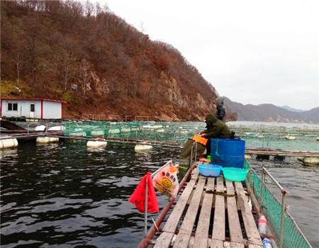 真正的战士(三)一一立冬战斗在鸭绿江大江口海排 化氏饵料钓鲤鱼