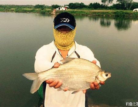 江湖边上钓鲤、草、鳊鱼的最佳饵料配方