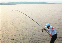 深秋为什么更适合使用抛竿钓法钓鱼