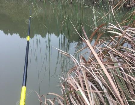 水坑的惊喜 钓鱼之家饵料钓鲫鱼