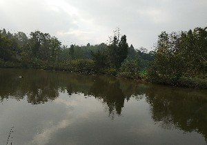 河堰村4组农家鱼塘