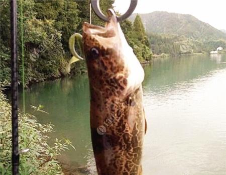 小菜鸟路亚记(大风+细雨+降温=斑鳜?) 铅笔饵料钓鳜鱼