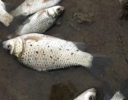 今天天气不错,小战水库,有大收获…… 化氏饵料钓青鱼