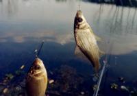 江河闹小鱼环境如何钓鲫鱼