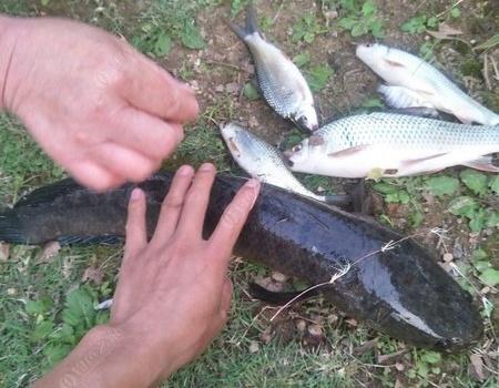 好久没钓鱼了,鱼竿都要发霉了 自制饵料钓黑鱼