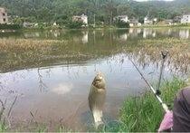巍山新云生态鱼
