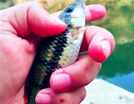 山间 小溪  碧蓝的溪水 钓鱼之家饵料钓马口鱼