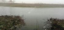 大雾弥漫出板鲫,南风吹起鱼闭口。