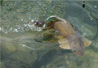 钓手分享垂钓过程中脱钩跑鱼最常见原因