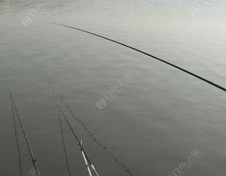 今天又去紅星海塘了 紅蟲餌料釣鯽魚