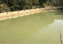 柳林村黑坑鱼塘