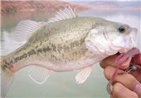8个路亚海鲈鱼的基本long8.vip网页版解析