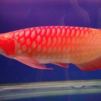 FISH7219