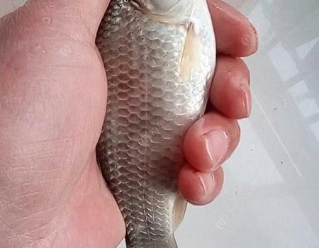徜于河堤,目的是看始封河里能釣魚否? 釣魚之家餌料釣鯽魚